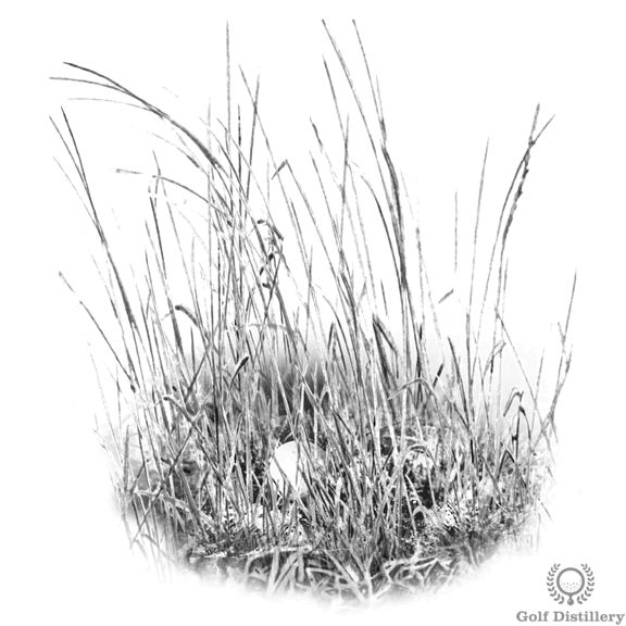 Tall grass (fescue) lie in golf